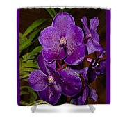 Vanda Dark Purple Shower Curtain