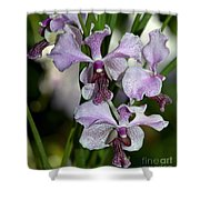 Vanda Emma Van Derventer 6906 Shower Curtain