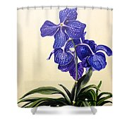 Vanda Sausai Blue Orchid Shower Curtain
