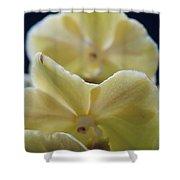 Vanilla Orchid Shower Curtain