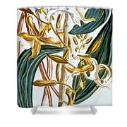 Vanilla Pods Shower Curtain