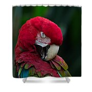 Vanity-close Up Of A Green Winged Macaw Shower Curtain