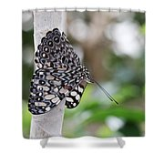 Variable Cracker Butterfly Shower Curtain