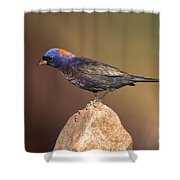 Varied Bunting Shower Curtain