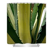 Variegated Agave Shower Curtain