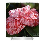 Variegated Camellia Shower Curtain