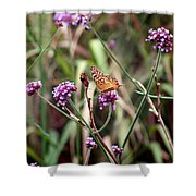 Variegated Fritillary Butterfly Shower Curtain