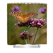Variegated Fritillary Butterfly Square Shower Curtain