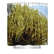 Variegated Screw Pine Shower Curtain
