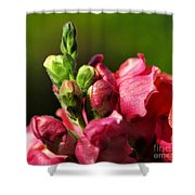 Variegated Snapdragon Shower Curtain