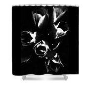 Variegated Tulips Shower Curtain