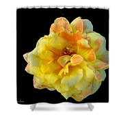 Variegated Yellow Rose Shower Curtain