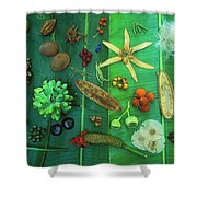 Variety Of Seeds And Fruits Shower Curtain