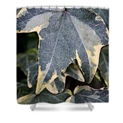 Varigated Ivy Leaves Shower Curtain