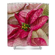 Varigated Poinsettia Shower Curtain