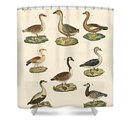 Various Kinds Of Geese Shower Curtain