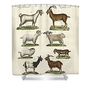 Various Kinds Of Goats And Bucks Shower Curtain