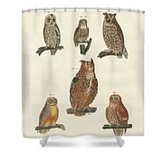 Various Kinds Of Owls Shower Curtain
