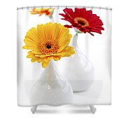 Vases With Gerbera Flowers Shower Curtain