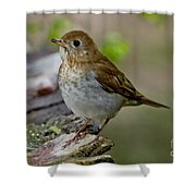 Veery Shower Curtain