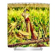 Veggin Shower Curtain