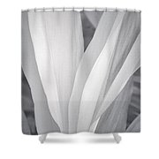 Veil Shower Curtain