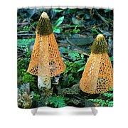 Veiled Lady Mushrooms Shower Curtain by Glen Threlfo