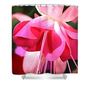 Velvet Fuchsia Skirt Shower Curtain