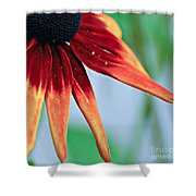 Velvet Petals Shower Curtain