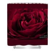 Velvet Rose Mirrored Edge Shower Curtain
