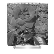Velvet Rose Shower Curtain