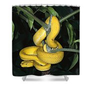 Vemonous Mcgregors Pit Viper Coiled Shower Curtain