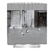 Cats Of Venice Shower Curtain
