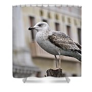 Venice Seagull Shower Curtain
