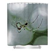 Venusta Orchard Spider Shower Curtain