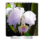 Veraflora Orchid  Shower Curtain