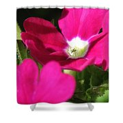 Verbena From The Ideal Florist Mix Shower Curtain
