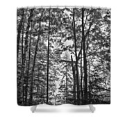Vermont Forest Sunrise Ricker Pond Black And White Shower Curtain