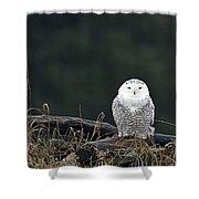 Vermont Snowy Owl Shower Curtain