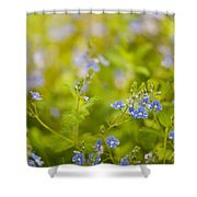 Veronica Chamaedrys Named Speedwell Or Gypsyweed Shower Curtain