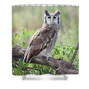 Verreauxs Eagle-owl Bubo Lacteus Shower Curtain