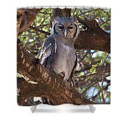 Verreauxs Eagle Owl In Tree Shower Curtain