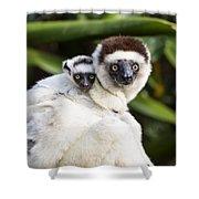 Verreauxs Sifaka With Baby Madagascar Shower Curtain