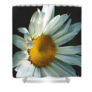 Vertical Daisy Shower Curtain