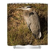 Vertical Heron Basking In The Morning Sun Shower Curtain