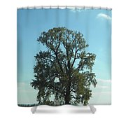 Vertical Tree Shower Curtain