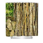 Vertical Vines Shower Curtain by Jess Kraft