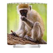 Vervet Monkey Shower Curtain
