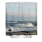 Seagull In Winter Shower Curtain