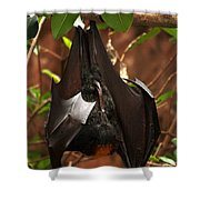 Very Fruity Bat Shower Curtain